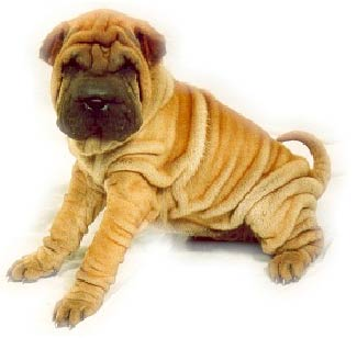 Chinese Shar-Pei  dog an dog encyclopedia