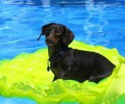 Snickers have a swim and relaxing